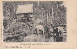 PENANG Elephants And Water Buffalo's Work MALAYSIA Malaisie Malaya Pinang Island Asia Asie éléphant - Malaysia