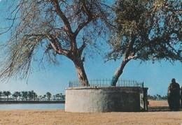 IRAQ - L'arbre Du Paradis Terrestre - The Tree Of Paradise  Vintage Old Photo Postcard - Iraq