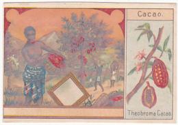 Chromo - Cacao, Theobroma - Trade Cards