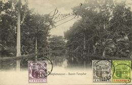 Mauritius Maurice, PAMPLEMOUSSES, Bassin Farquhar (1906) Postcard - Mauritius