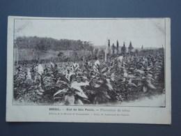 Cpa BRESIL Etat De  Säo Paulo. Plantation De Tabac. Recto-verso - São Paulo