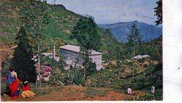 TEA FACTORY AND ESTATE NEAR NUWARA ELIYA - CEYLON - Small Format - Sri Lanka (Ceylon)