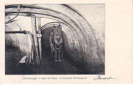 Charbonnage - Dans La Fosse : Un Bouveau De Transport - Cartes Postales