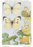 D33202 CARTE MAXIMUM CARD 2007 NETHERLANDS - BUTTERFLY PIERIS BRASSICAE - RARE POSTMARK CP MUSEUM ORIGINAL - Butterflies