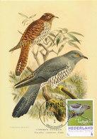 D33207 CARTE MAXIMUM CARD 2017 NETHERLANDS - CUCULUS CUCKOO CP ORIGINAL - Songbirds & Tree Dwellers