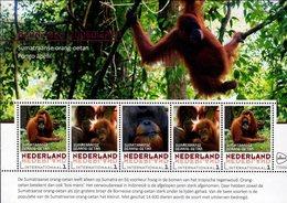 Netherlands - 2018 - Endangered Mammals - Sumatran Orangutan - Mint Souvenir Sheet - Ungebraucht