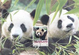 D33225 CARTE MAXIMUM CARD 2017 NETHERLANDS - GIANT PANDA CP ORIGINAL - Maximum Cards