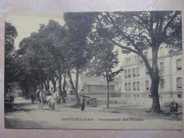 CPA 25 MONTBELIARD Promenade Des Fossés - Montbéliard