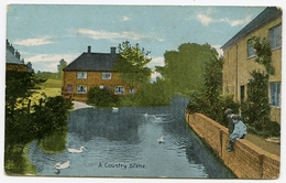 ENGLAND : A COUNTRY SCENE - SWANS - England