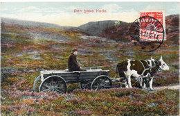 Den Jyske Hede  - Attelage  Boeufs - Danemark  (104603) - Equipaggiamenti