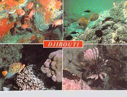 Afrique- DJIBOUTI  Joyaux De La Mer Rouge (B)   (Multi Vues - Poissons Et Coraux )   *PRIX FIXE - Djibouti