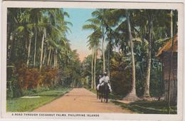 Philippines   A Road Through Cocoanut Palms, Philippine Islands - Philippines