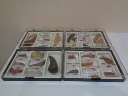 Colección De 27 Replicas De Garras Y Dientes Fósiles De Dinosaurios En 4 Estuches. Marca Geofin-Italy. - Fossils