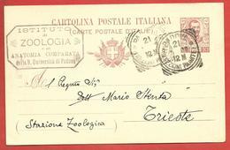 CARTOLINA POSTALE VG ITALIA - Tipo Floreale Vittorio Emanuele III - MARIO STENTA - 1906 TRIESTE - S. CP30 MILLESIMO 05 - 1900-44 Vittorio Emanuele III