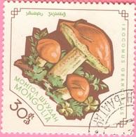 Mongolia -  Mushrooms - Ixocomus Granulatus - 30 - 1964 - Mongolia