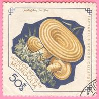 Mongolia -  Mushrooms - Lactarius Scrobiculatus - 50 - 1964 - Mongolia