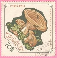 Mongolia -  Mushrooms - Lactarius  Deliciosus - 70 - 1964 - Mongolia