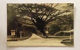 PPC Maleisie - Penang (Botanical Garden) Unused - Malaysia