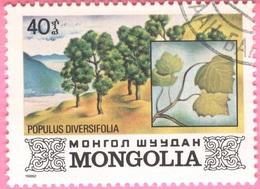 MONGOLIA -Plants (40) - 1982 - Mongolia