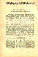 Vom Briefmarkensammeln/ Artikel, Entnommen Aus Kalender / 1907 - Books, Magazines, Comics