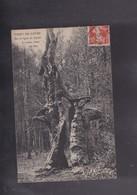 44 LOIRE ATLANTIQUE, La Forêt Du Grave , Le Vieux Chêne Du Duc - France