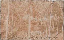CPA PHOTO VANUATU NOUVELLE HEBRIDES PORT VILA Sous Les Cocotiers 1909 Rare - Vanuatu