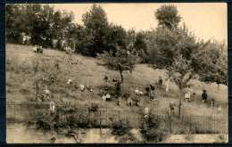 CP   Baelen   ---   Forges  --  Pensionnat St François  --  Jeux En Plein Air  --  1903 - Baelen