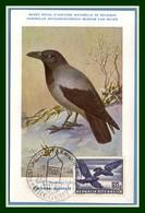 Autriche Maximum Yv. N° PA 54 Corbeau 1950 1953 Oiseau Bird Vogel - Cartoline Maximum