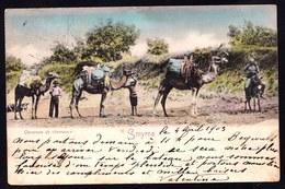 TURQUIE - SMYRNE - CARAVANE DE CHAMEAUX - 1903 - TAMPONS SMYRNE SUR LEVANT POSTE FRANCAISE VERS BELGIQUE - Turquia