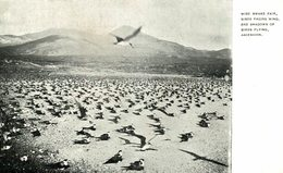WIDE AWAKE FAIR BIRDS FACING WIND AND SHADOWS OF BIRDS FLYING    ASCENSION  ISLAND - Ascension Island