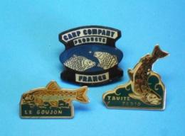 3 PIN'S //   ** TRUITE FARIO / GOUJON / CARP COMPANY FRANCE ** - Badges