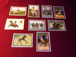9 STICKERS   PANINI  THEME LE CHEVAL  / HORSE - Merchandising