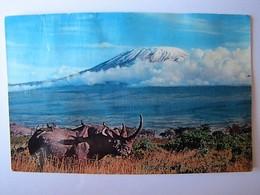 TANZANIE - Le Kilimandjaro - Tanzania
