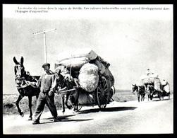 1962  --  ESPAGNE  LA RECOLTE DU COTON DANS LA REGION DE SEVILLE   3P467 - Non Classés
