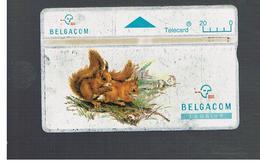 BELGIO (BELGIUM) -  1994  ANIMALS: SQUIRRELS      - USED - RIF. 10827 - Belgium