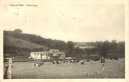 Vieux-Ville (Ferrieres). Paturage - Ferrières