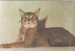 CALENDARIC. 1989 CAT. RUSSIA.*** - Calendars