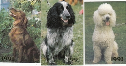 CALENDARIC. 1991 THE PERFECT DOGS. 3 PIECES. POODLE. *** - Calendars