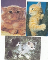 CALENDARIC. 1993 PIECE CATS AND DOGS. RUSSIA. 4 PIECES *** - Calendars