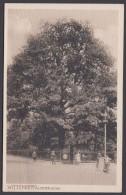 """Luther :  AK """"Wittenberg-Luther-Eiche"""", 1907 Gelaufen - Christentum"""