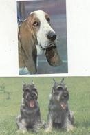 CALENDARIC. 1991 PIECE  DOGS. RUSSIA. 2 Pieces. *** - Calendars