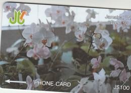 Jamaica - White Orchids - 11JAMD - Jamaica