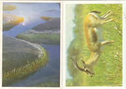 CALENDARIC. 1991 THE NATURE. BAKU AND MOSCOW. *** - Calendars