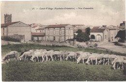 FR66 CANET - Brun 75 - Colorisée - Vue D'ensemble - Troupeau De Moutons - Animée - Belle - Canet Plage