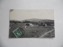 Cpa  Pâturages Au Tanet  1908 - France