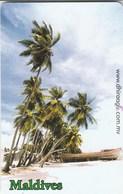 Maldives - Palmtrees - Maldives