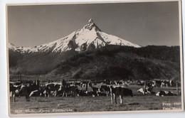 Chile-Chili : Cerro Puntlagudo   (années 30) (PPP8379) - Chile