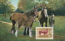 D33242 CARTE MAXIMUM CARD 1951 HUNGARY - HORSE CHEVAL PFERD CP VINTAGE ORIGINAL - Horses