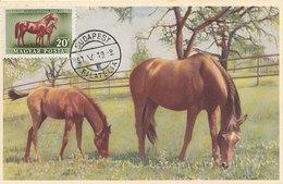 D33243 CARTE MAXIMUM CARD 1951 HUNGARY - HORSE CHEVAL PFERD CP VINTAGE ORIGINAL - Horses