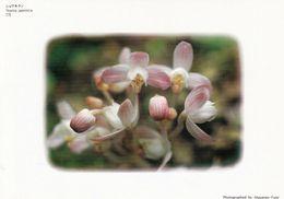 1 AK Blumen In Japan -  Yoania Eine  Blütenpflanze Aus Der Orchideenfamilie * - Other